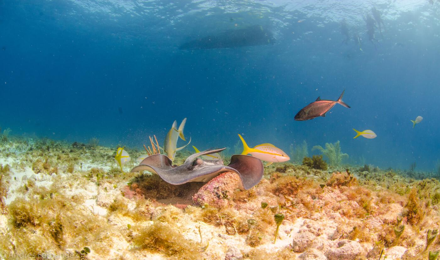 Isla Mujeres Scuba Diving Snorkeling Squalo Adventures-2