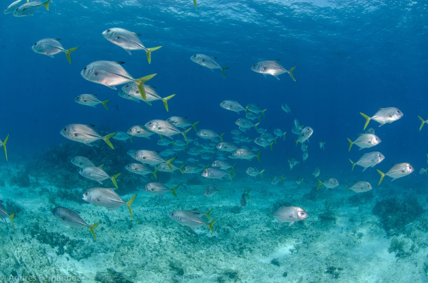 Isla Mujeres Scuba Diving Snorkeling Squalo Adventures-20