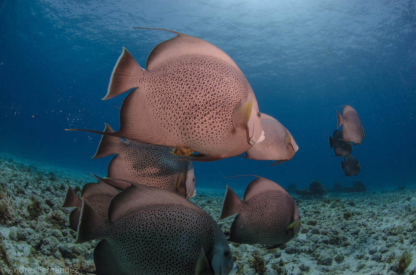 Isla Mujeres Scuba Diving Snorkeling Squalo Adventures-5