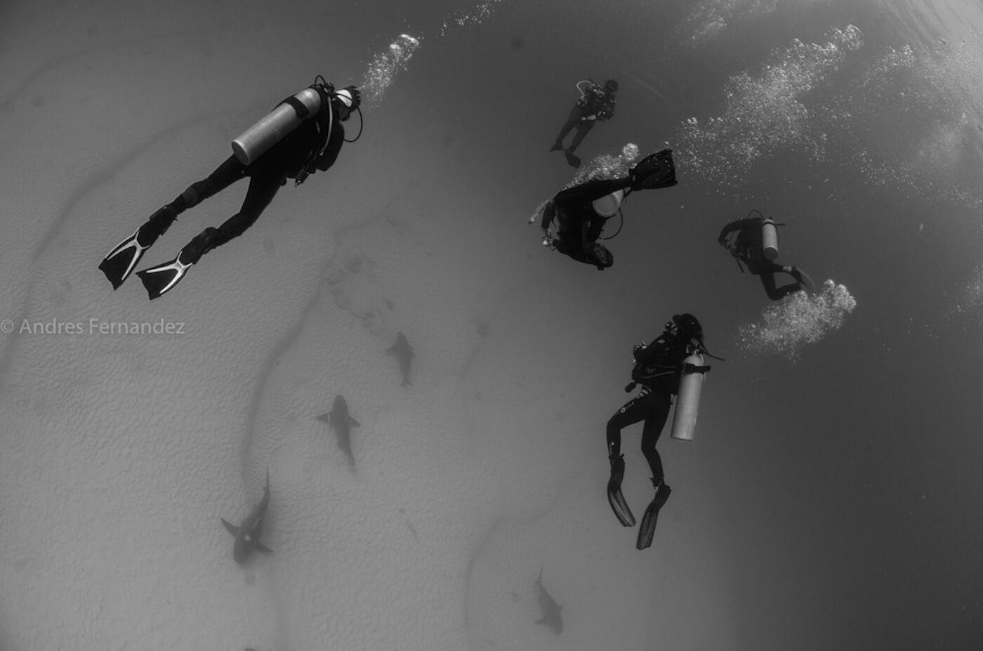 Isla Mujeres Scuba Diving Squalo Adventures-10