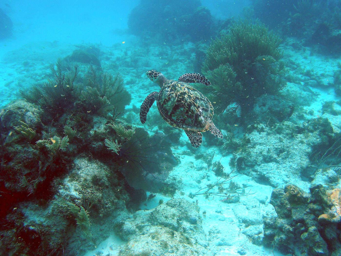 Isla Mujeres Sea Turtle Snorkeling Scuba Diving Squalo Adventures-1