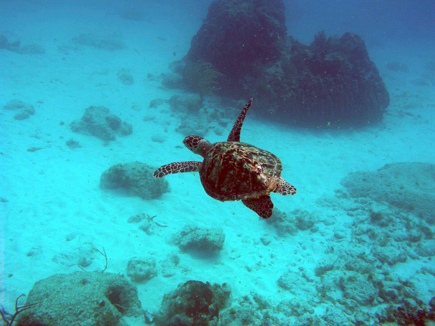 Isla Mujeres Sea Turtle Snorkeling Scuba Diving Squalo Adventures-3