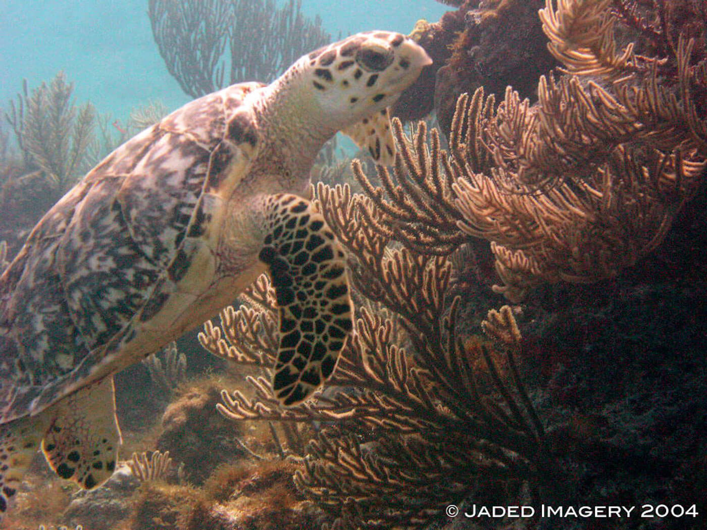 Isla Mujeres Sea Turtle Snorkeling Scuba Diving Squalo Adventures-6
