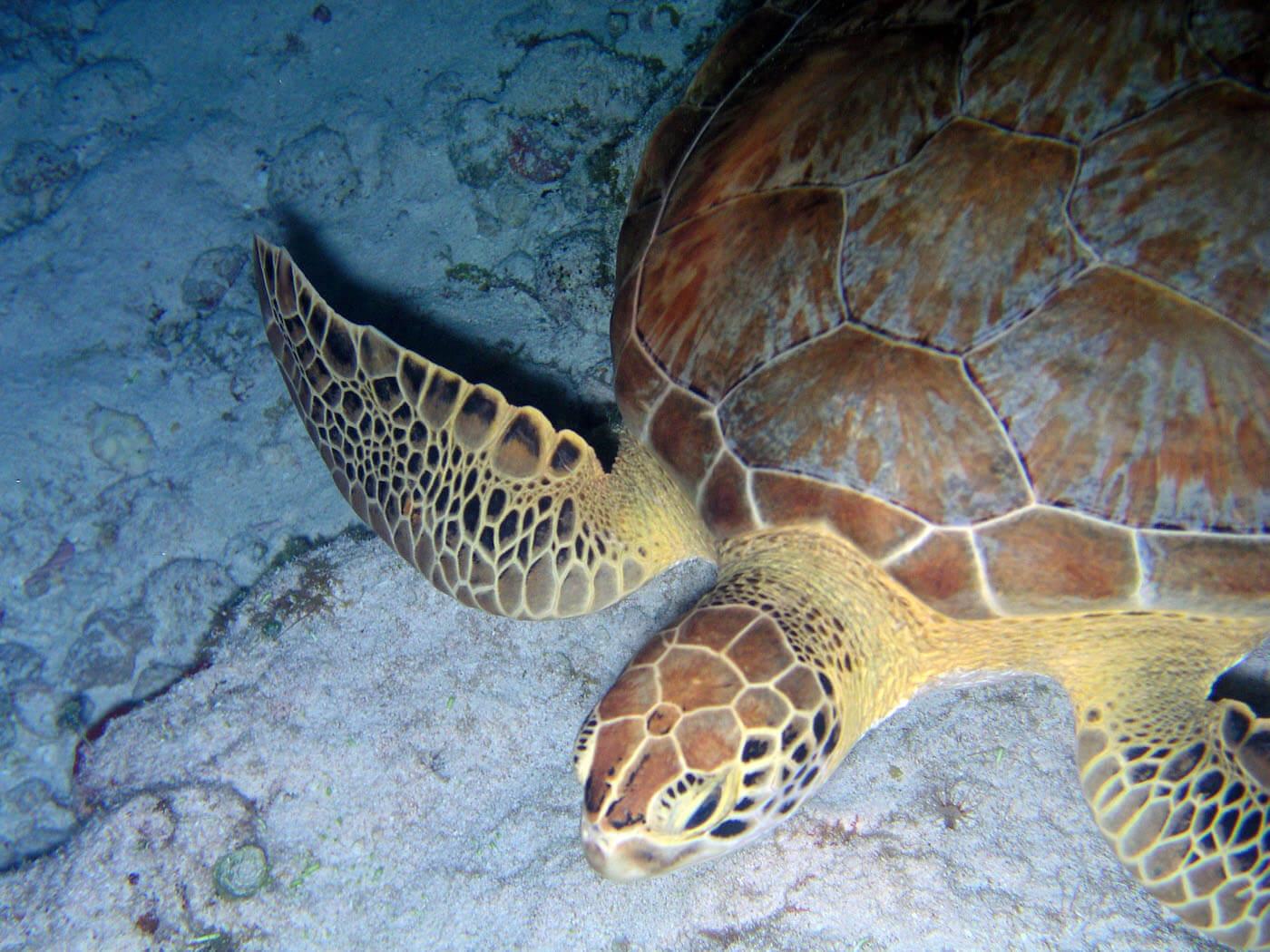 Isla Mujeres Sea Turtle Snorkeling Scuba Diving Squalo Adventures-7