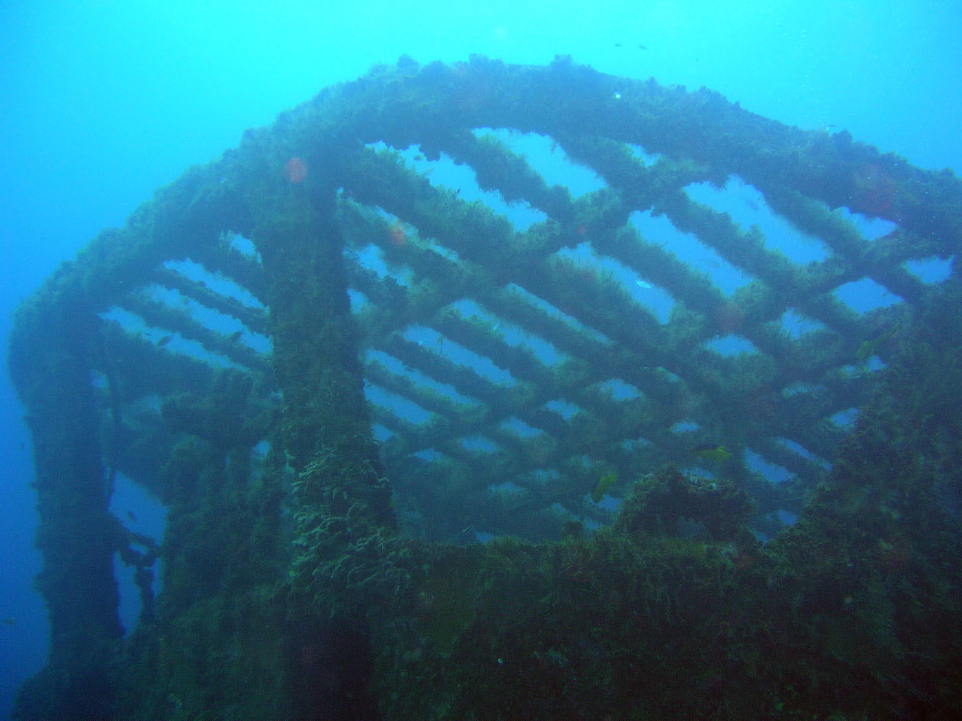 Isla Mujeres Shipwreck Scuba Diving Squalo Adventures-9