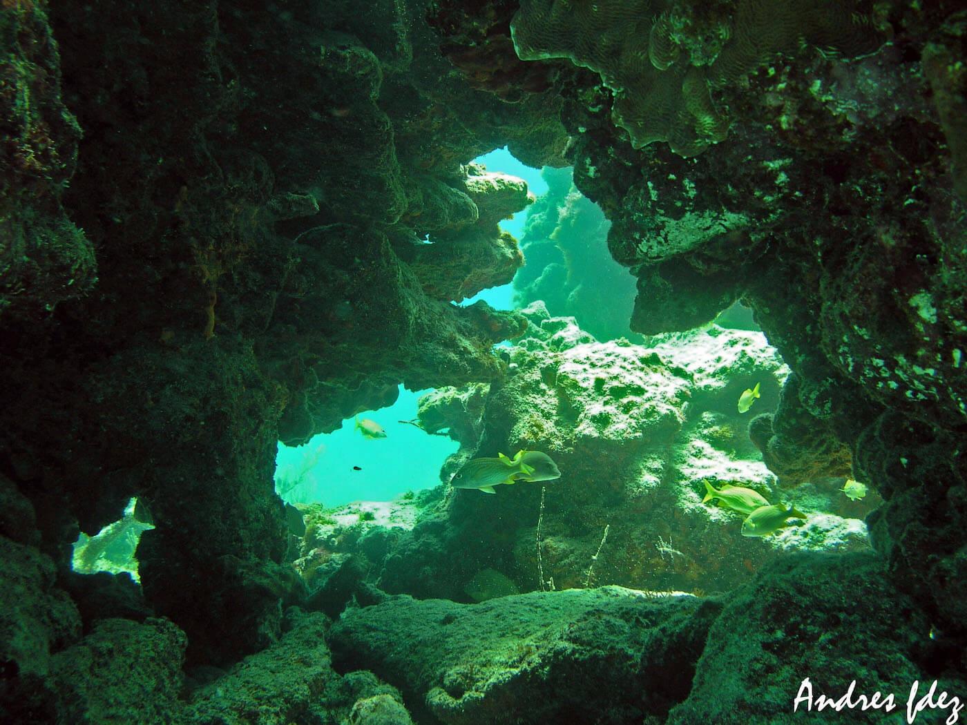 Isla Mujeres Snorkeling Scuba Diving Squalo Adventures-3