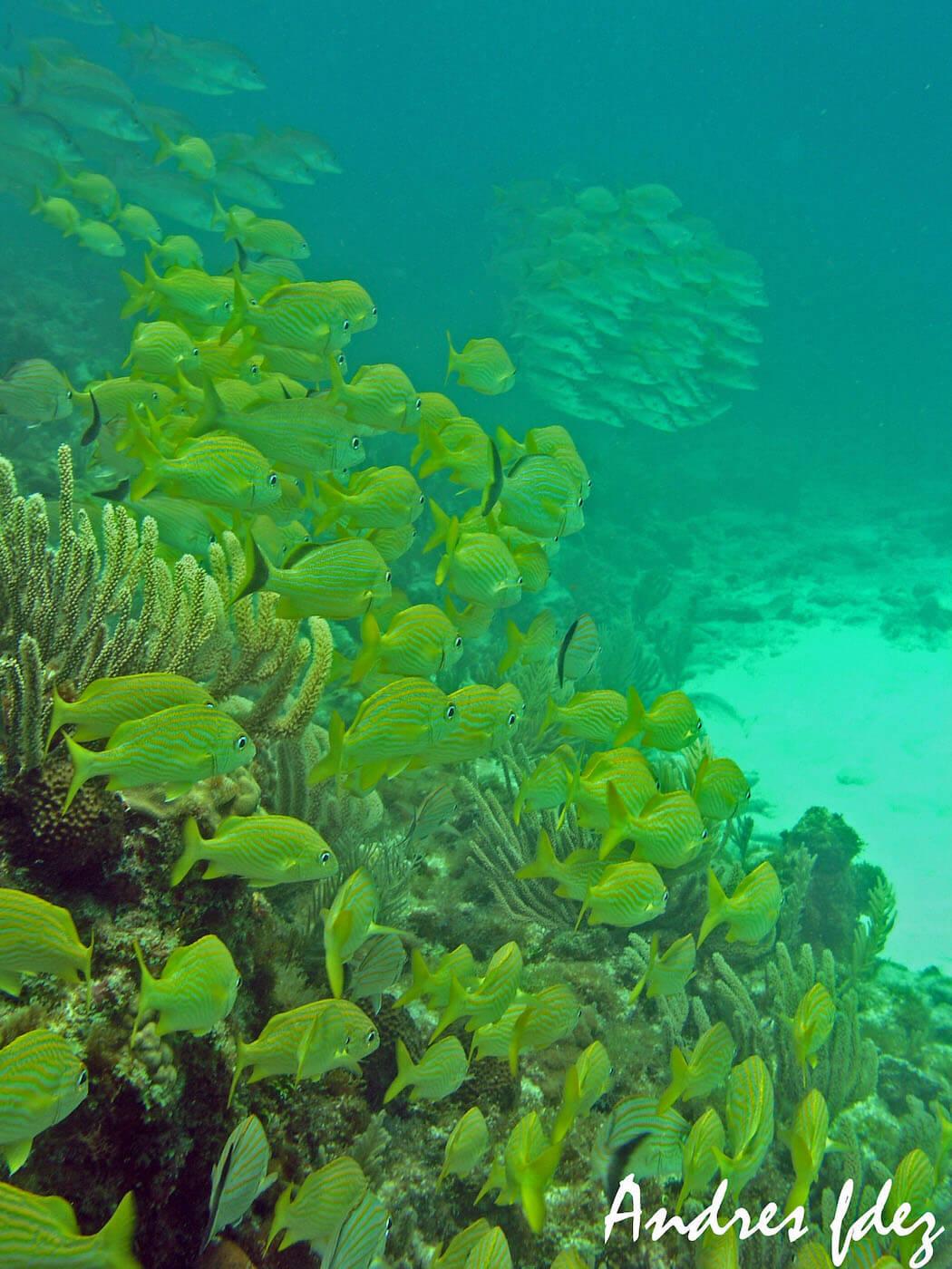 Isla Mujeres Snorkeling Scuba Diving Squalo Adventures-4