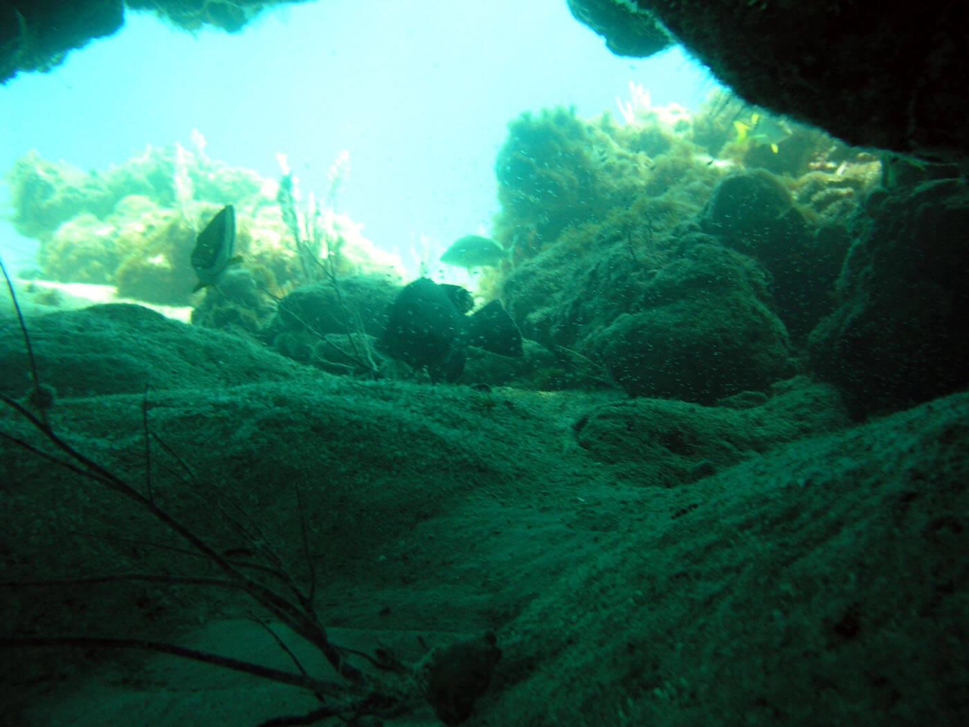 Isla Mujeres Snorkeling Scuba Diving Squalo Adventures-7