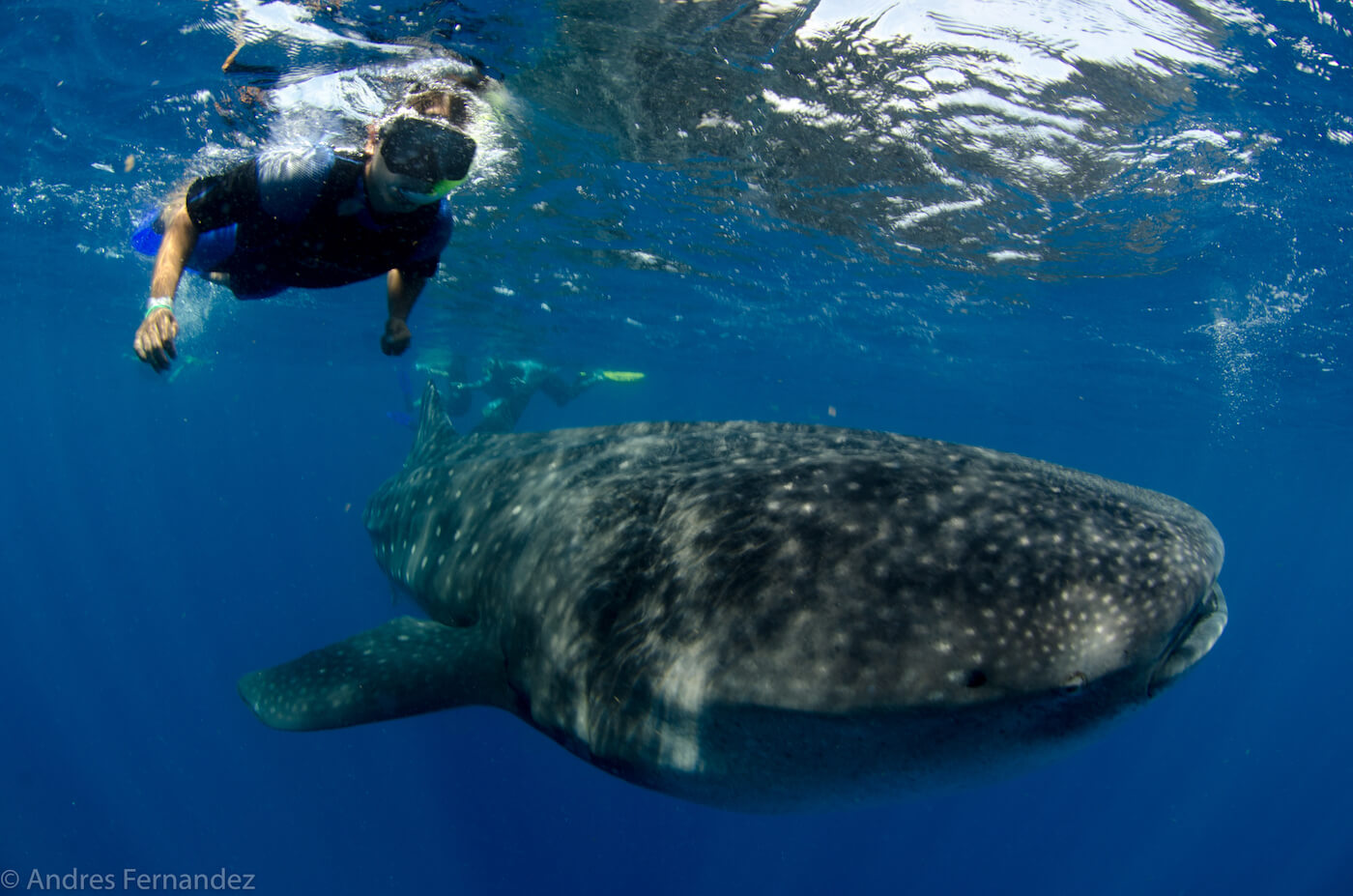 Isla Mujeres Whale Shark Snorkel Tours Squalo Adventures-18