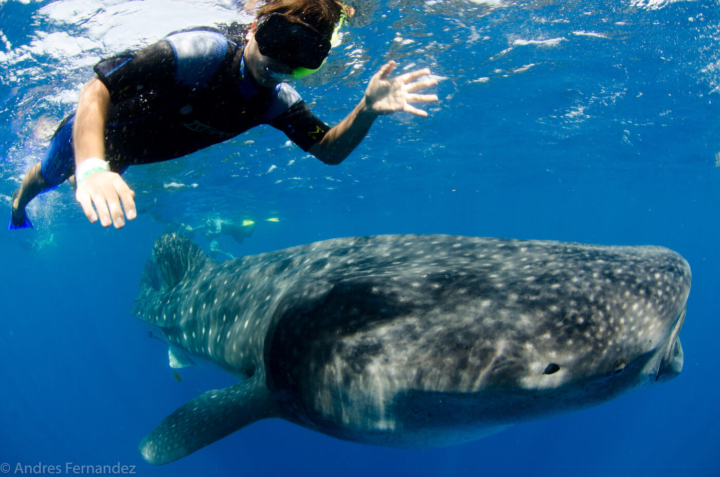 Isla Mujeres Whale Shark Snorkel Tours Squalo Adventures-19
