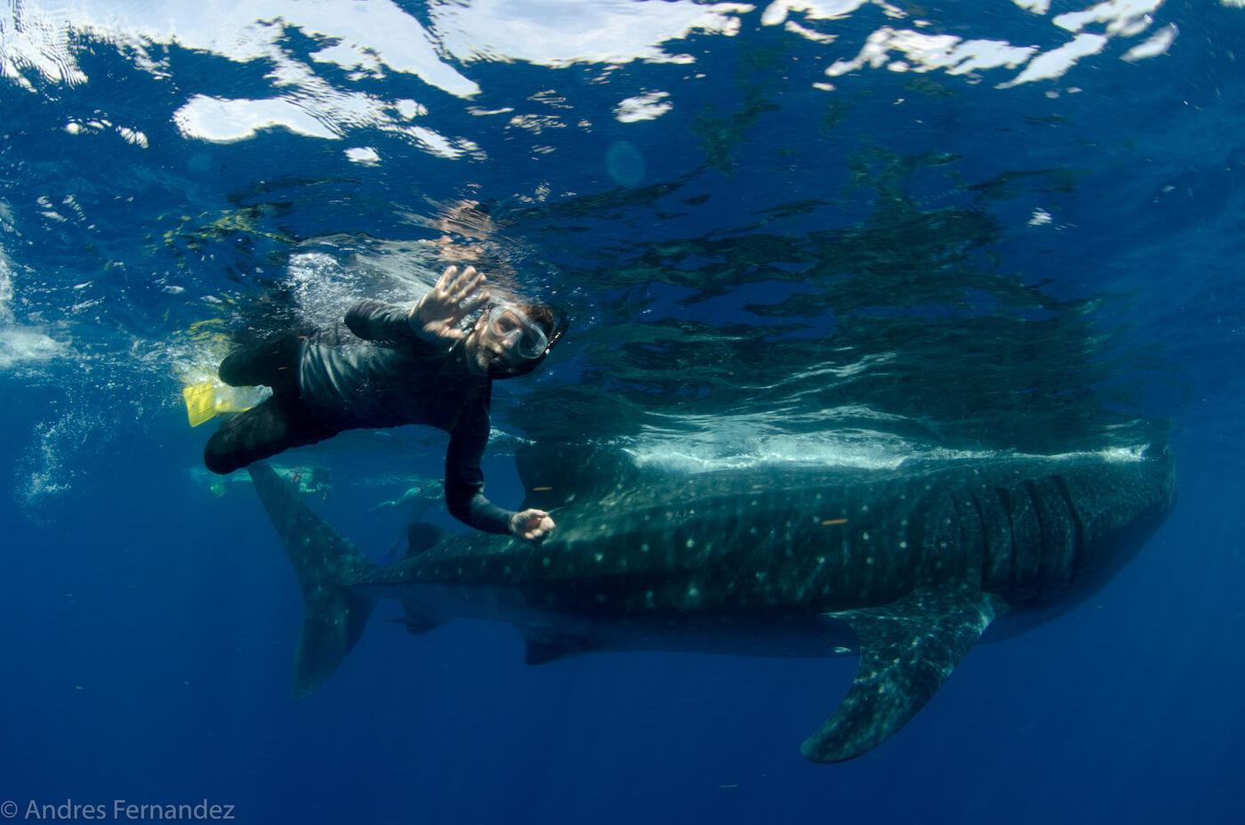 Isla Mujeres Whale Shark Snorkel Tours Squalo Adventures-24