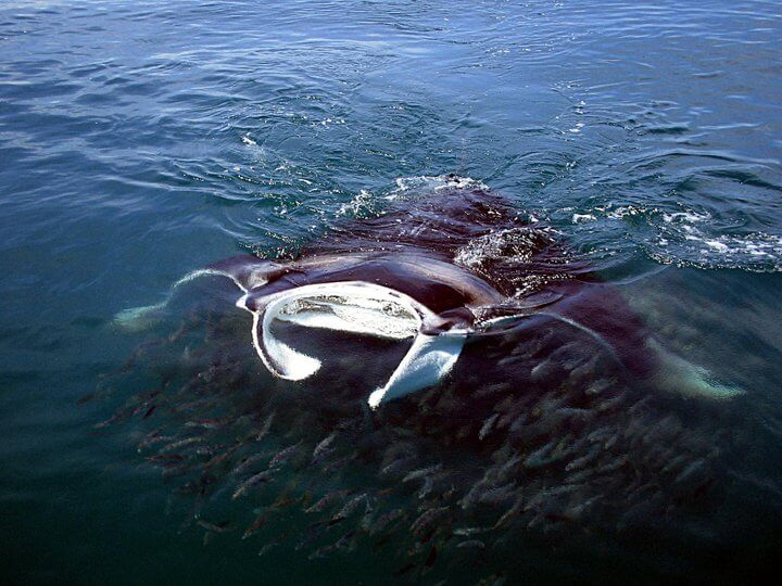 Isla Mujeres Whale Shark Tours Squalo Adventures-12