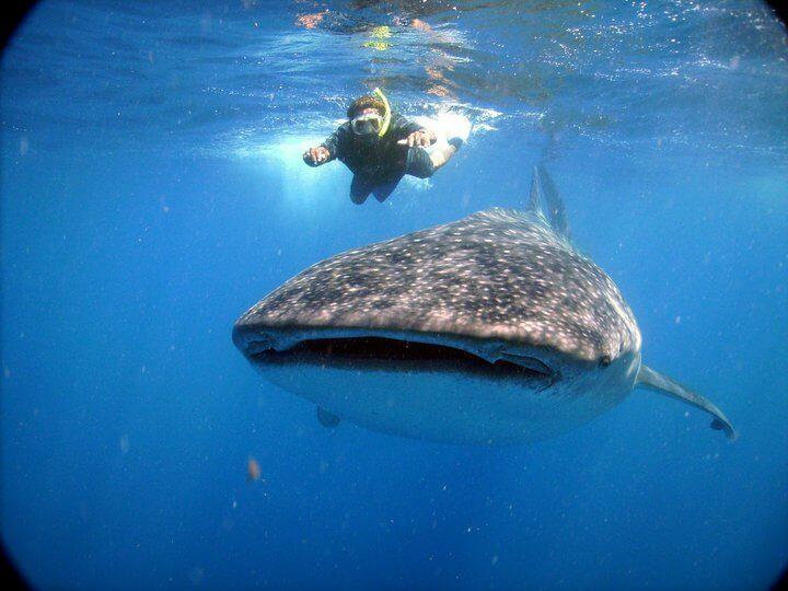 Isla Mujeres Whale Shark Tours Squalo Adventures-13