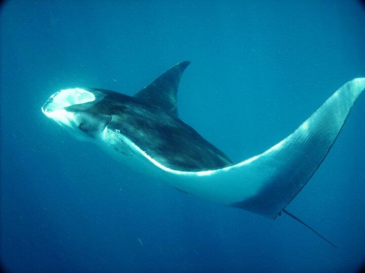 Isla Mujeres Whale Shark Tours Squalo Adventures-16