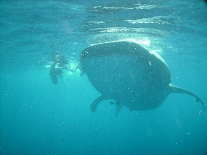 Isla Mujeres Whale Shark Tours Squalo Adventures-18