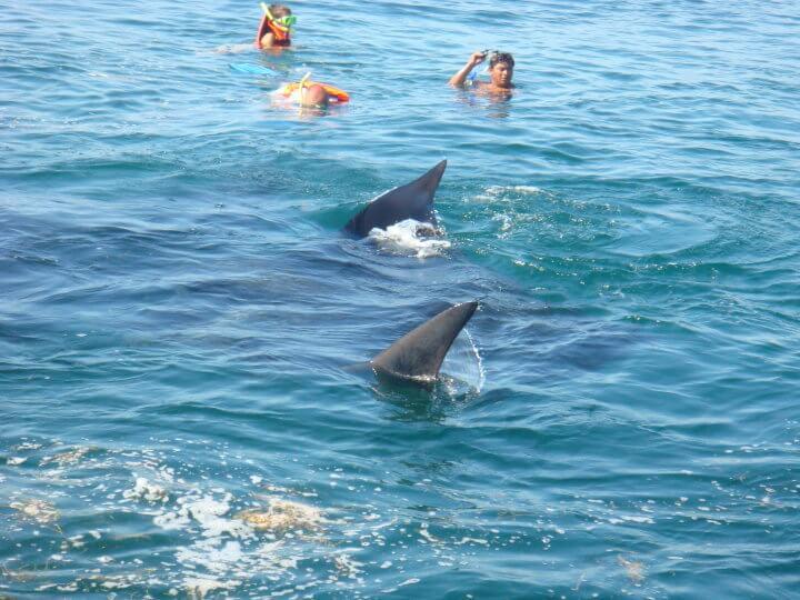 Isla Mujeres Whale Shark Tours Squalo Adventures-3
