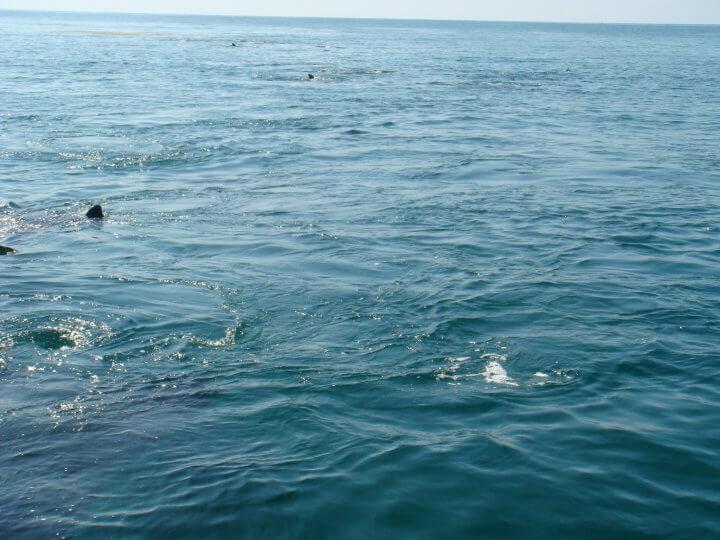 Isla Mujeres Whale Shark Tours Squalo Adventures-4