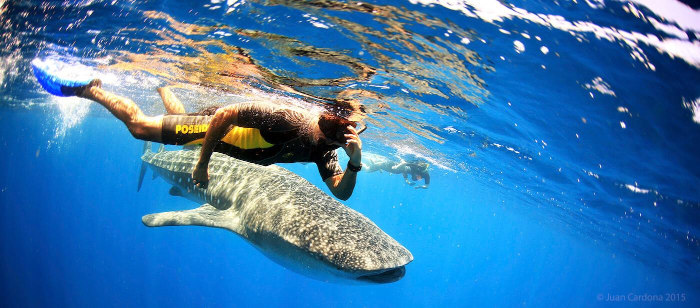 Whale-Shark-Tours-Cancun-Isla-Mujeres-Riviera-Maya-9