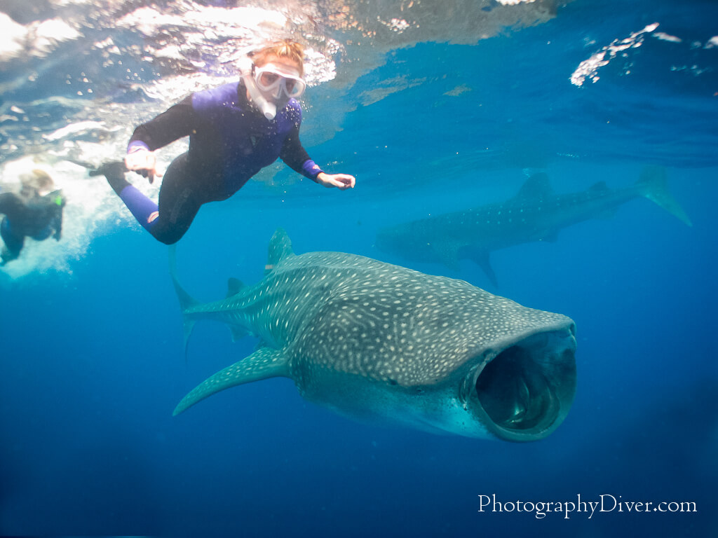 Whale-Shark-Tours-Cancun-Riviera-Maya-10