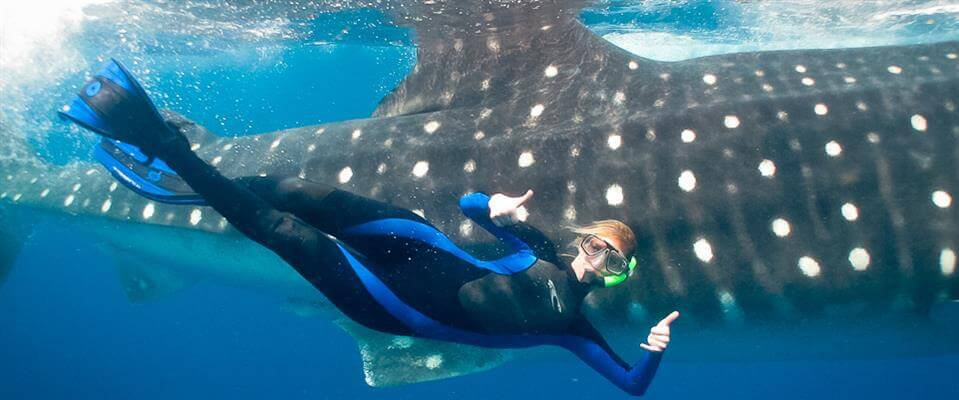 Whale-Shark-Tours-Cancun-Riviera-Maya-15