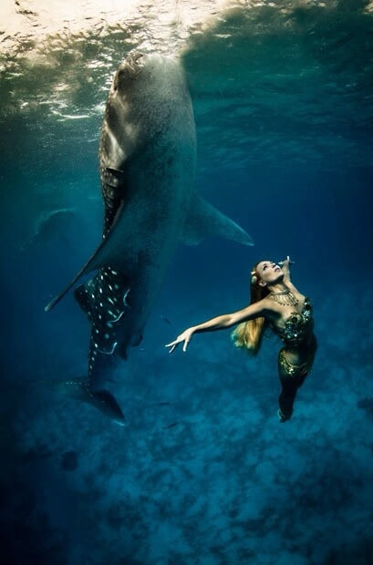 Whale-Shark-Tours-Cancun-Riviera-Maya-9