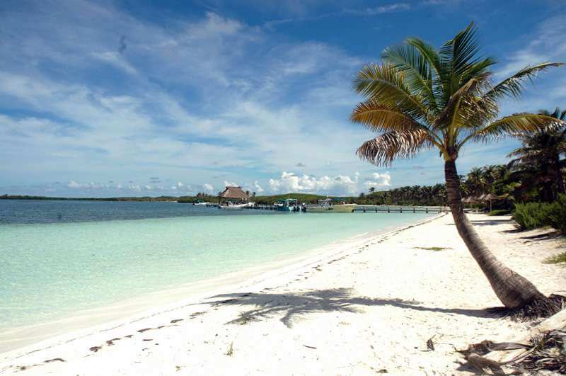 Whale-Shark-Tours-Snorkel-Cancun-Isla-Mujeres-Riviera-Maya-2